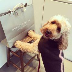 Dog Apparels   Miss Darcy's Adventures