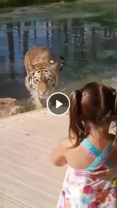 Menina rainha dos tigres смешные видео с живот Funny Short Videos, Funny Animal Videos, Cute Funny Animals, Cute Cats, Pet Videos, Humor Videos, Funny Babies, Funny Dogs, Cute Babies