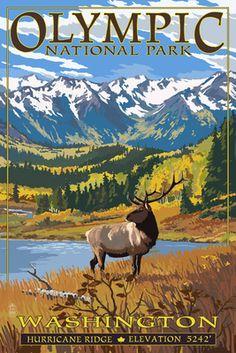 Olympic National Park, Washington - Hurricane Ridge - Lantern Press Artwork (Art Print Available) Colorado Mountains, Rocky Mountains, Aspen Colorado, Hurricane Ridge, Outdoor Stickers, Aquarium, Rocky Mountain National Park, Parcs, Vintage Travel Posters