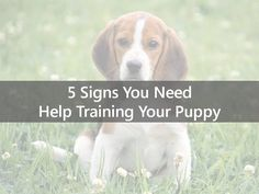 http://www.slideshare.net/annali201/5-signs-you-need-help-training-your-puppy  Are you having a tough time training your puppy? You are not alone. Recognize when you need help training your dog.