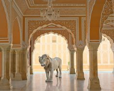 Photographer Karen Knorr Brings Indian Myths to Life | Yatzer