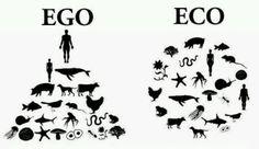 Eco perspective