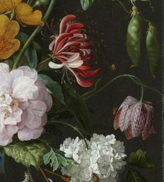 Detail of Still Life with Flowers in a Glass Vase by Jan Davids de Heem, Rijksmuseum (check out how to access the full thing via the Rijksstudio - I understand it should be free to use)