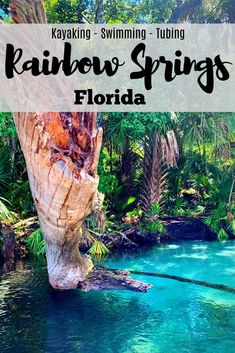 Kayaking, swimming, and tubing are all fun activities available along the Rainbow River and Rainbow Springs State Park in Dunnellon, Florida. Use this guide to plan your trip which is perfect for both Florida Vacation, Florida Travel, Tampa Florida, Vacation Places, Vacation Spots, Travel Usa, Places To Travel, Places To See, Greece Vacation