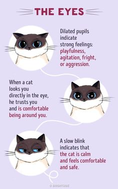 For all the cat whisperers out there! - Imgur