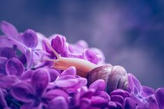 Snail & Lilac by Alla Dorofeeva on 500px