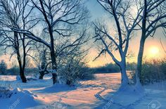 winter scene trees - Google Search