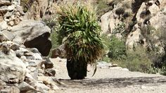 Camponesa berbere