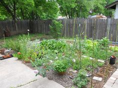 A Truly Green Garden – Maintaining an Eco-friendly Garden