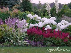 Ogród prawie romantyczny - strona 564 - Forum ogrodnicze - Ogrodowisko