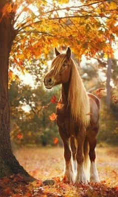 More than 70 super beautiful horse pictures! - More than 70 super beautiful horse pictures! unique beautiful horses in autumn in - Beautiful Horse Pictures, Most Beautiful Horses, Animals Beautiful, Cute Horses, Pretty Horses, Horse Love, Farm Animals, Cute Animals, Horse Photos