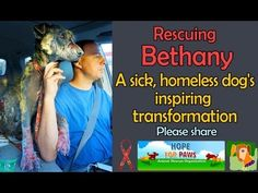 Rescuing Bethany - a sick, homeless dogs inspiring transformation (Please share)