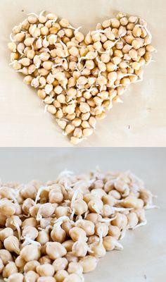 Sprouted chickpeas - yummy in a salad or just like that :)  Des pois chiches bio germés... délicieux dans une salade ou même juste à croquer tel quel!  #poischiches#germination#chickpeas#sprouts#healthy#santé#mangersainetbon#organic#bio#cru#raw#rawfood#rawvegan#végétalien#plantbased#whatveganseat#plantstrong#govegan#veggieromandie#lausanne#vegansofig#vegansofswitzerland#vegansoffrance#veganyeah#hungryvegan#food#foodporn#repas#horngryvegan#heart#veganheart#coeur#légumineuses