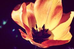 """""""Il est d'étranges soirs où les fleurs ont une âme."""" #ASamain"""
