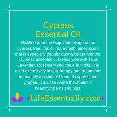 #Cypress #essentialoil #ameo #lifeessentially