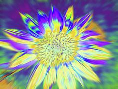 Sunflowers Art Print featuring the photograph Sunpopped by Cris Fulton