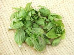 ふきのとうは日本原産の山菜です。その歴史は古く、縄文時代から食べられてきました。ふきのとうは、冬が終わると顔を出すので「春の使者」とも呼ばれています。ツヤがあり、つぼみが閉じている小さめのものが美味しいと言われています。