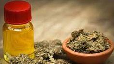 Esperan que el cannabis medicinal pueda producirse en nuestra provincia: Por el momento Salta ya cuenta con un comité de supervisión