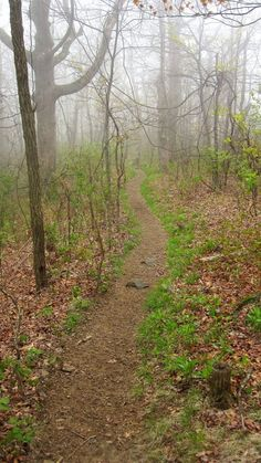 A path that leads into the foggy misty morning.