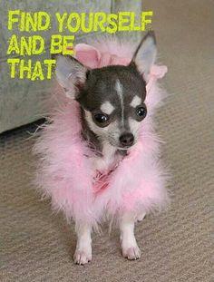 Oh so pretty Chihuahua! Cute Chihuahua, Chihuahua Puppies, Cute Puppies, Cute Dogs, Dogs And Puppies, Chihuahuas, Chi Dog, Animals And Pets, Cute Animals
