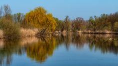 Spring reflection - Spring reflection