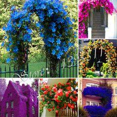 100 CÁI nước hoa by cầu vồng cây leo hạt giống hoa, coulourful hoa đá hoa cress, hoa hạt giống cho nhà vườn miễn phí vận chuyển