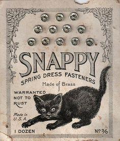snappy cat snaps!
