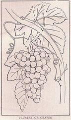 Cluster of Grapes ~ public domain illustration, 1917.