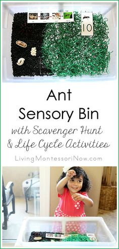 This fun ant sensory bin combines fine-motor work, a scavenger hunt with counting, and ant life cycle activities; post includes the Montessori Monday linky collection.
