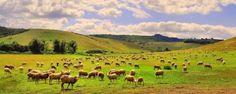 PRANOSTIKA NA ŠTVRTOK 23.3.: V marci aj ovce v tanci