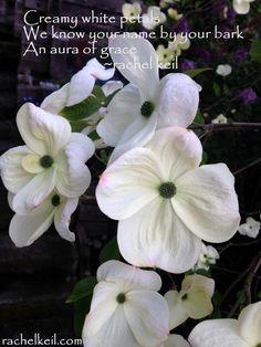 Aura of Grace-Blog Haiku