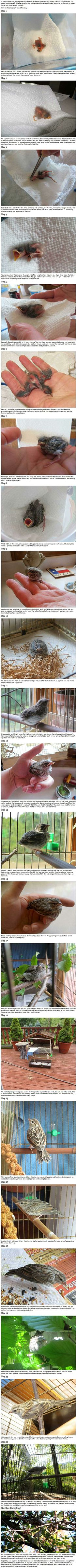 A man going for a jog found this baby bird. This is what happened next…
