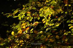 autumn leaves / lichtspiele II by nadine schumacher
