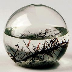 ecosphere. self contained ecosystem, this is one of the coolest things I've seen in a long time give it some sun and watch