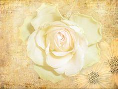 Strukturfoto: Vintage Rose