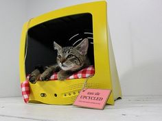 Old TVs, Suitcases and VCRs Upcycled into Vintage Pet Products - cool... maybe this would keep kitties off my computer if they had their own to sleep on/in
