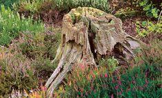 Sie sind im Weg und werden auch vom Profi-Baumfäller zurückgelassen: Baumstümpfe. Wie schafft man es, Baumstümpfe schnell verrotten zu lassen?