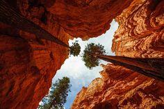 Bryce Canyon skywards [OC] (4256x2832) - aklouie - #travel #photography #adventure #amazing #beautiful