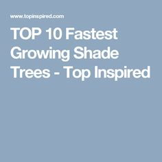 TOP 10 Fastest Growing Shade Trees - Top Inspired
