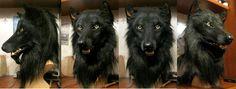 DeviantArt: More Like Black Wolf Mask by Qarrezel Fursuit Head, Wolf Mask, Wolf Costume, Cosplay Diy, Cosplay Ideas, Baby Chickens, Anthro Furry, Werewolf, Halloween