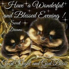 Good Night Everyone, God Bless You! Good Night Love Quotes, Good Night I Love You, Cute Good Morning Quotes, Good Night Love Images, Good Night Prayer, Good Night Everyone, Good Night Blessings, Good Night Wishes, Good Night Sweet Dreams