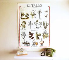 Vintage Botanical Chart Spanish Educational Pull Down by Lunartics $95.38