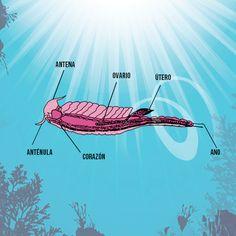 Discover The Aqua Dragons Anatomy Descubre La Anatomia De Los Aquadragons D Aqua Pets Sea Monkeys