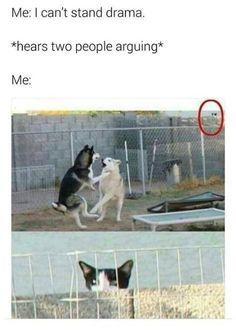 TOP 75 lustige Katzen Meme – Animals acting like humans – TOP 75 funny cats memes – Animals acting like humans – Memes Humor, Memes Top, Dank Memes Funny, Funny Animal Memes, Funny Cat Videos, Dog Memes, Cute Funny Animals, Funny Relatable Memes, Funny Dogs