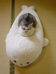 潜水艦のような猫 pic.twitter.com/Ll779Yi84G