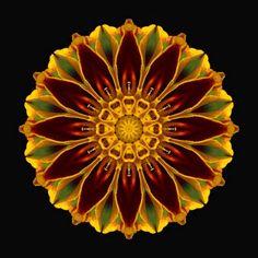 Flower Mandalas Project (Marigold)  http://flowermandalas.blogspot.com