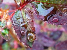 Gouttes d'eau dans la nature - Richesse des coloris en transparence - Photo macro de gouttes d'eau