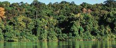 CarmonaTrujillo: Salvaguardar el bosque amazónico demanda mejoras