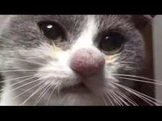 10 Cats Who Got Stung By Bees And Wasps - YouTube