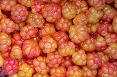 CLOUDBERRY An amber colored fruit, native to the Alpine and Arctic tundra as well as boreal forests. The plant grows 15-25cm tall and produces soft, juicy, segmented berries. If eaten fresh, the berries have a very distinct tart taste, and if eaten over ripe, they have a creamy taste, like yogurt, and become sweeter. Cloudberries are often cooked into jams and jellies, and in some Nordic countries, a traditional liqueur like Lakkalikööri (a Finnish liqueur) is made from them.